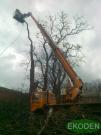 wycinanie-drzew